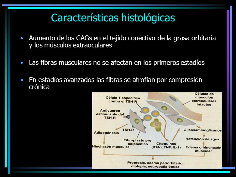 Características histológicas Aumento de los GAGs en el tejido conectivo de la grasa orbitaria y los músculos extraoculares Las fibras musculares no se