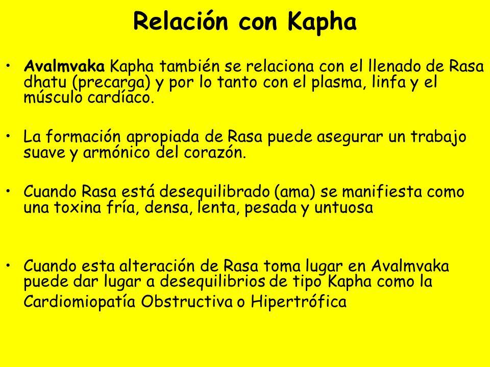 Relación con Kapha Avalmvaka Kapha también se relaciona con el llenado de Rasa dhatu (precarga) y por lo tanto con el plasma, linfa y el músculo cardíaco.