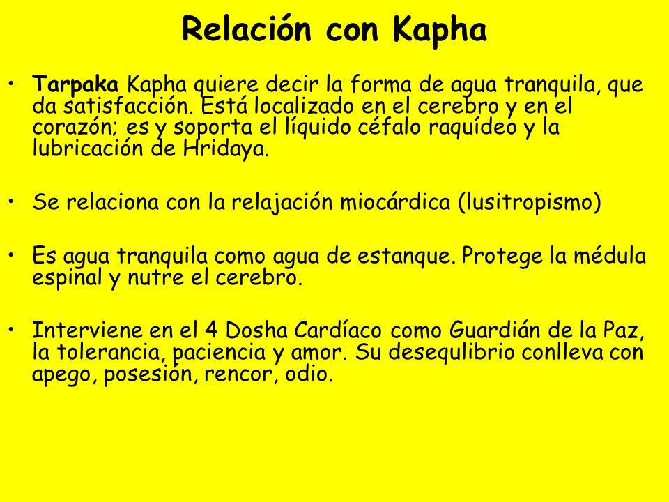 Relación con Kapha Tarpaka Kapha quiere decir la forma de agua tranquila, que da satisfacción.