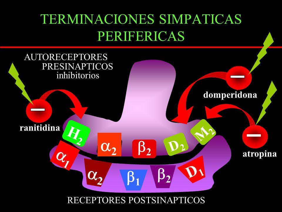 TERMINACIONES SIMPATICAS PERIFERICAS RECEPTORES POSTSINAPTICOS AUTORECEPTORES PRESINAPTICOS inhibitorios 2 D2D2 2 1 D1D1 2 H2H2 M2M2 1 2 domperidona atropina ranitidina