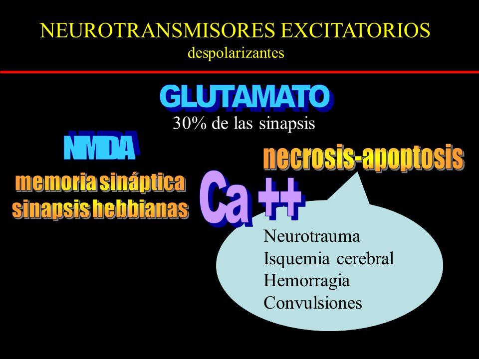 NEUROTRANSMISORES EXCITATORIOS despolarizantes 30% de las sinapsis Neurotrauma Isquemia cerebral Hemorragia Convulsiones