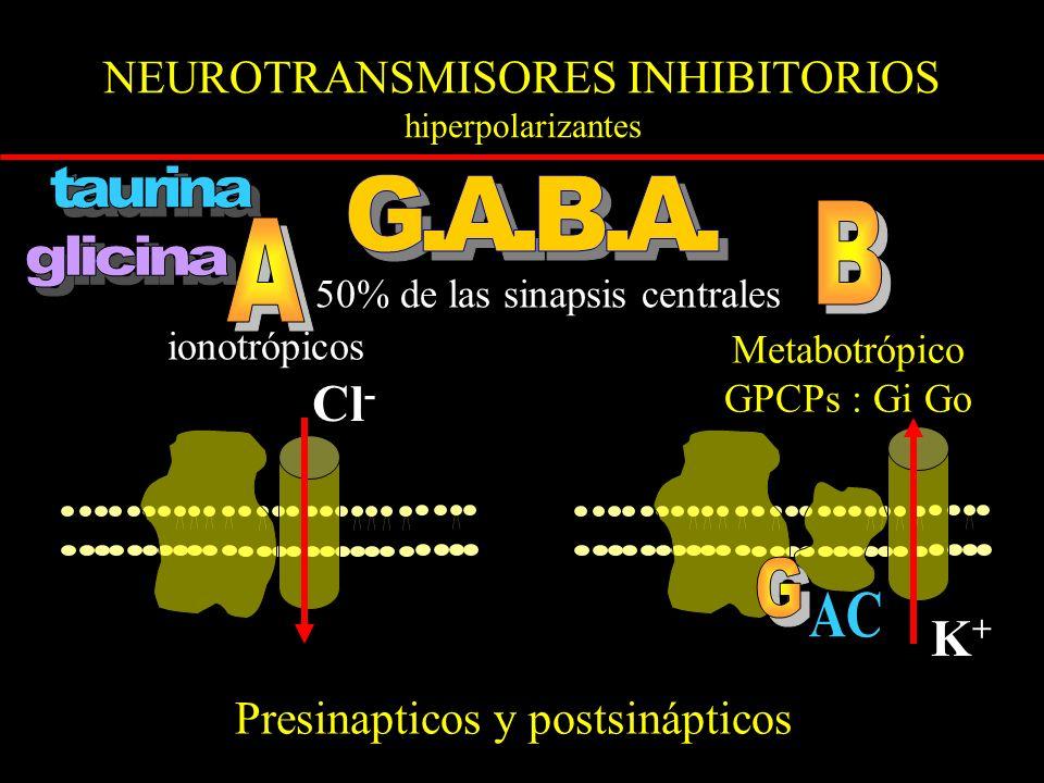 NEUROTRANSMISORES INHIBITORIOS hiperpolarizantes ionotrópicos Metabotrópico GPCPs : Gi Go 50% de las sinapsis centrales Cl - Presinapticos y postsinápticos K+K+