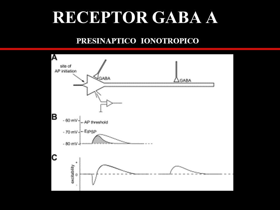 RECEPTOR GABA A PRESINAPTICO IONOTROPICO