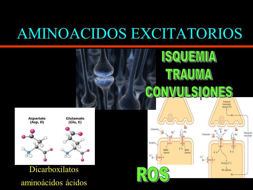 AMINOACIDOS EXCITATORIOS Dicarboxilatos aminoácidos ácidos
