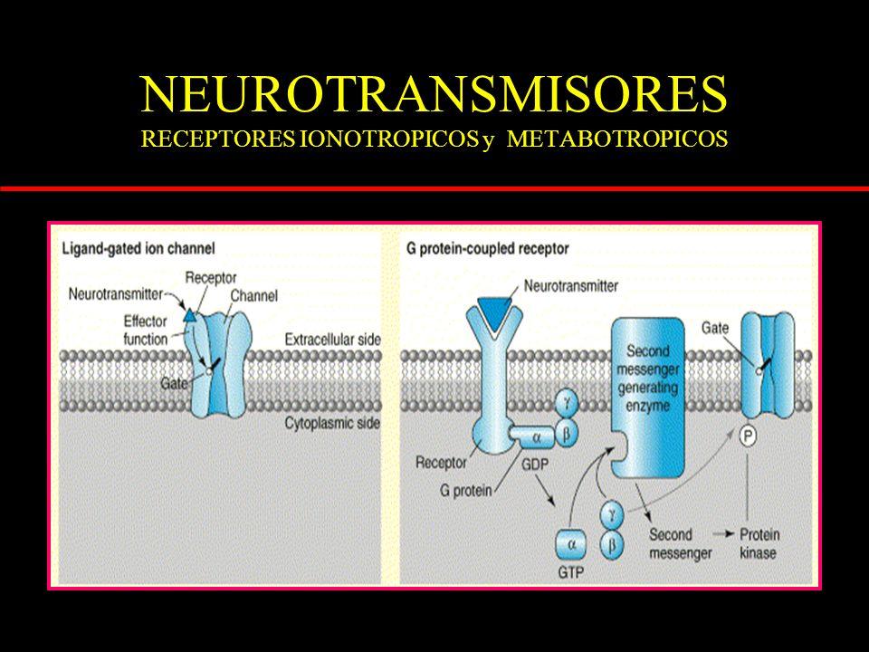 NEUROTRANSMISORES EXCITATORIOS receptores metabotrópicos Ca ++ Mg ++ N-metil D-aspartato Na + Ácido kaínico -amino 3-hidroxi 5-metil isoxazol propiónico Na + ionotrópicos adenilciclasa - fosfolipasa C- fosfatidilinositol