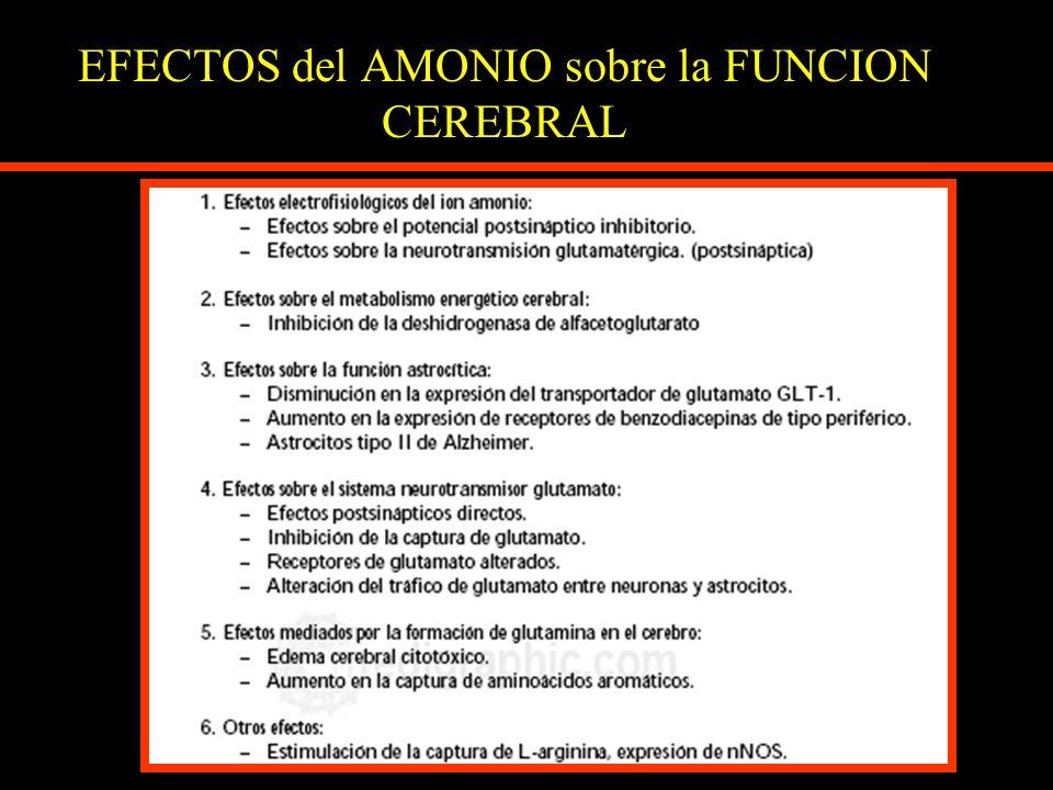 EFECTOS del AMONIO sobre la FUNCION CEREBRAL