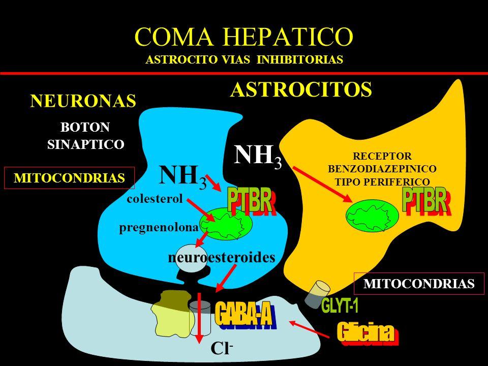 COMA HEPATICO ASTROCITO VIAS INHIBITORIAS ASTROCITOS BOTON SINAPTICO RECEPTOR BENZODIAZEPINICO TIPO PERIFERICO NH 3 MITOCONDRIAS NEURONAS Cl - colesterol pregnenolona neuroesteroides MITOCONDRIAS