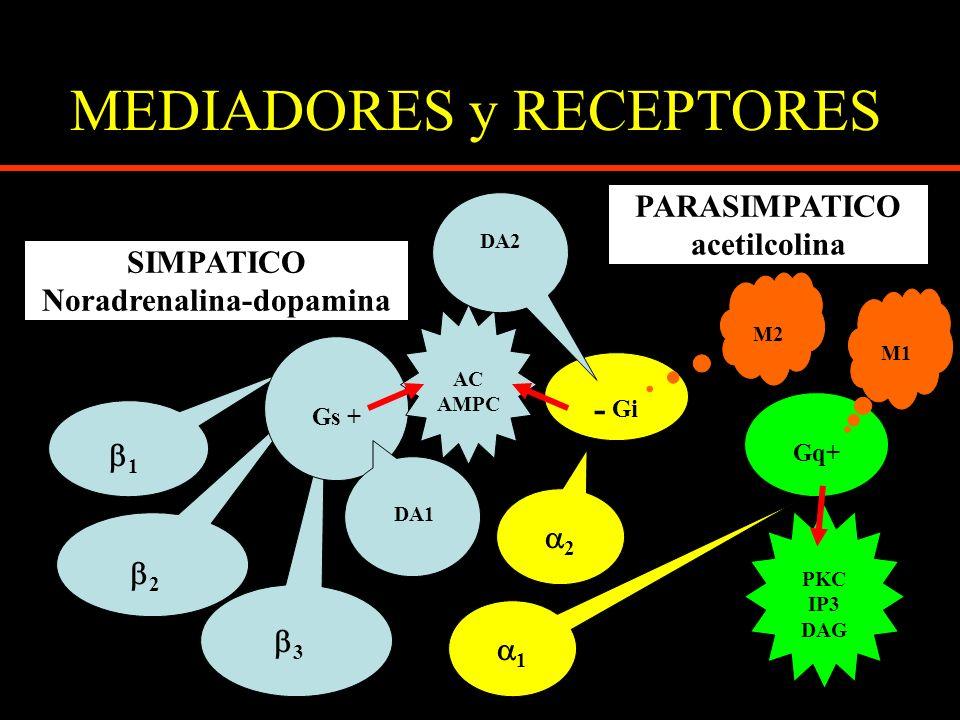 MEDIADORES y RECEPTORES SIMPATICO Noradrenalina-dopamina 1 2 3 2 1 Gs + DA1 - Gi Gq+ AC AMPC PARASIMPATICO acetilcolina M1 M2 PKC IP3 DAG DA2