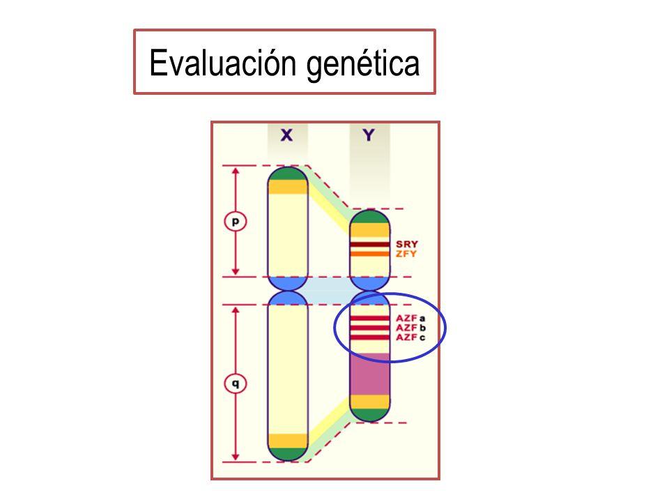 Evaluación genética