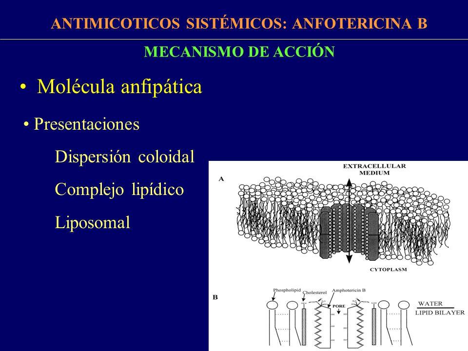 MA: –Unión al ergosterol de membrana.–Creación de conducto transmembrana.