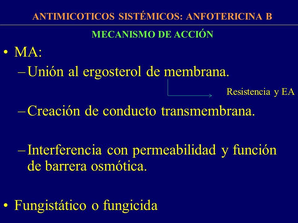 FARMACOCINÉTICA ANTIMICOTICOS SISTÉMICOS: ANFOTERICINA B Absorción EV UP > 90 % Rápido pasaje a tejidos: unión a colesterol de hígado, bazo, pulmón y riñones Baja penetración a LCR: 2-4 % T1/2: 15 días Valores plasmáticos no se alteran por deterioro renal, hepático o hemodialisis Degradación en tejidos.