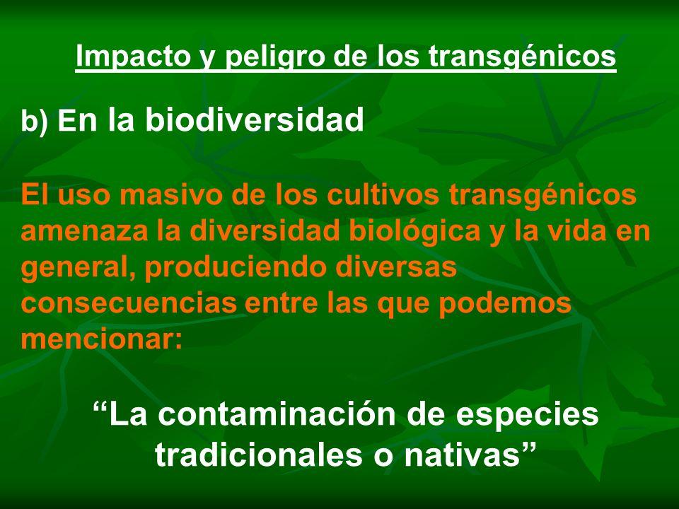 Impacto y peligro de los transgénicos b) E n la biodiversidad El uso masivo de los cultivos transgénicos amenaza la diversidad biológica y la vida en