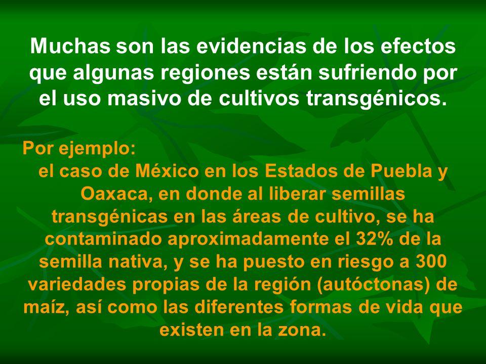 Muchas son las evidencias de los efectos que algunas regiones están sufriendo por el uso masivo de cultivos transgénicos. Por ejemplo: el caso de Méxi