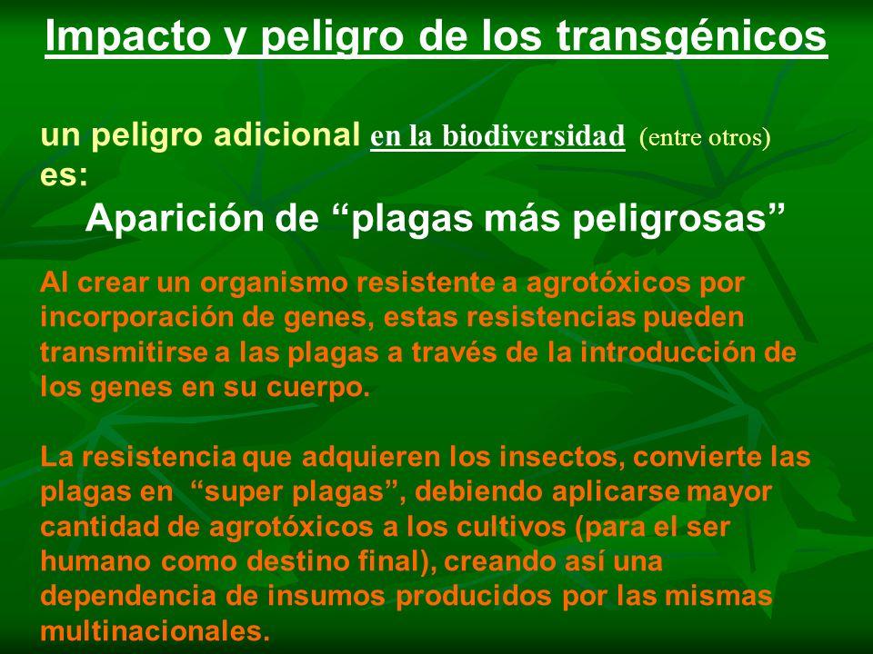 Impacto y peligro de los transgénicos un peligro adicional en la biodiversidad (entre otros) es: Aparición de plagas más peligrosas Al crear un organi