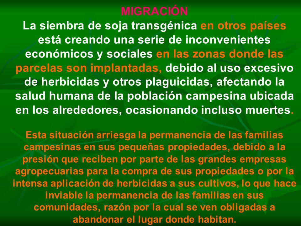 MIGRACIÓN La siembra de soja transgénica en otros países está creando una serie de inconvenientes económicos y sociales en las zonas donde las parcela