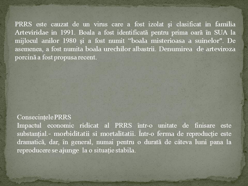PRRS este cauzat de un virus care a fost izolat şi clasificat in familia Arteviridae in 1991. Boala a fost identificată pentru prima oară în SUA la mi