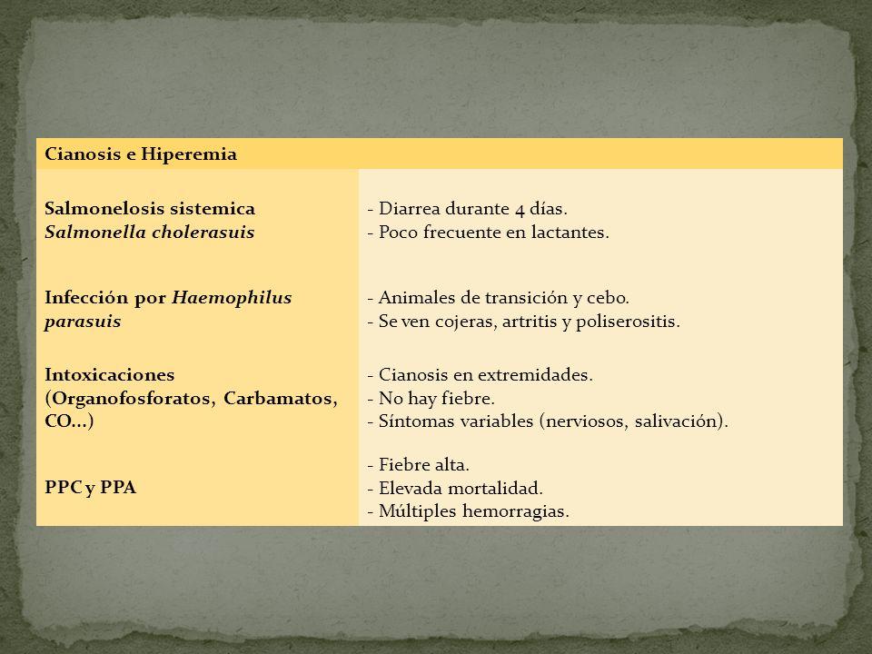 Cianosis e Hiperemia Salmonelosis sistemica Salmonella cholerasuis - Diarrea durante 4 días. - Poco frecuente en lactantes. Infección por Haemophilus