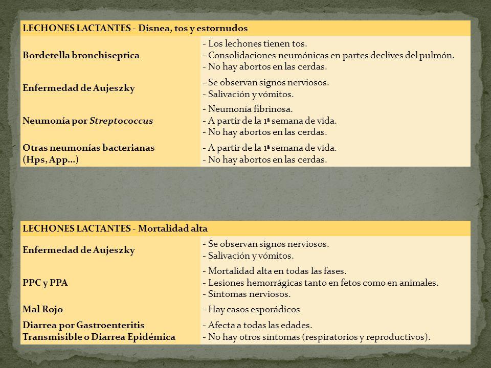 LECHONES LACTANTES - Mortalidad alta Enfermedad de Aujeszky - Se observan signos nerviosos. - Salivación y vómitos. PPC y PPA - Mortalidad alta en tod