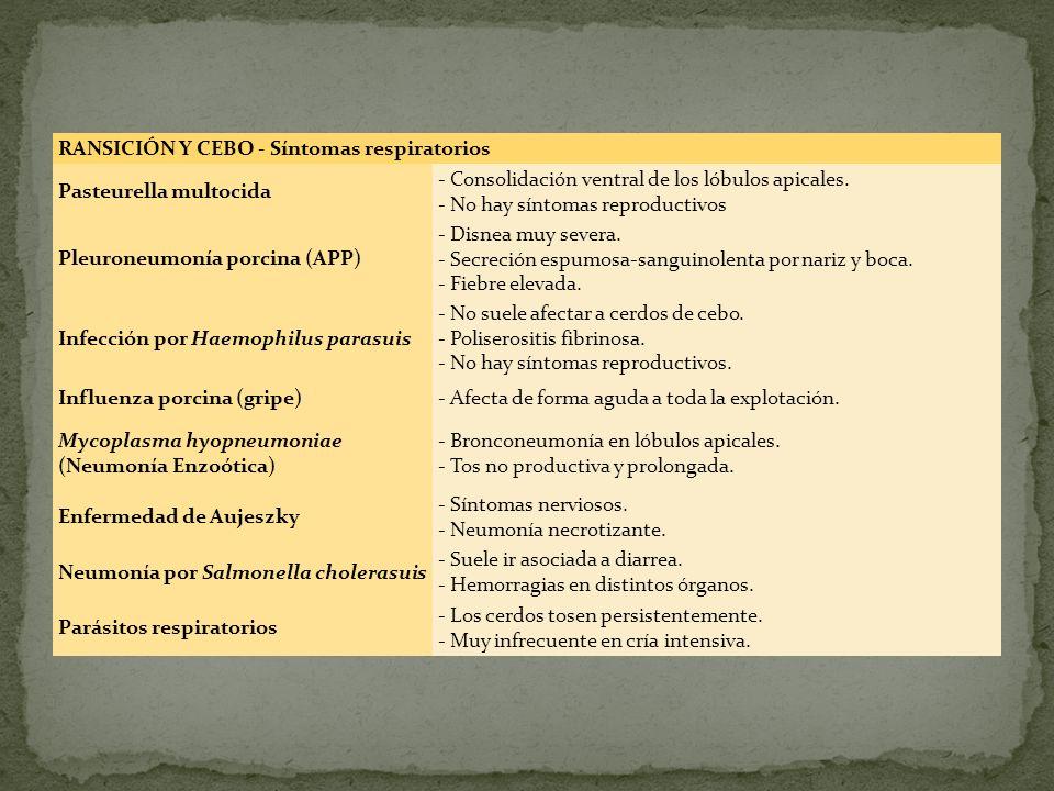 RANSICIÓN Y CEBO - Síntomas respiratorios Pasteurella multocida - Consolidación ventral de los lóbulos apicales. - No hay síntomas reproductivos Pleur