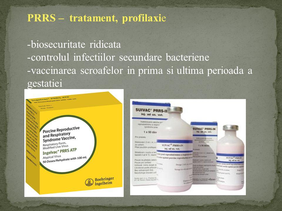PRRS – tratament, profilaxie -biosecuritate ridicata -controlul infectiilor secundare bacteriene -vaccinarea scroafelor in prima si ultima perioada a