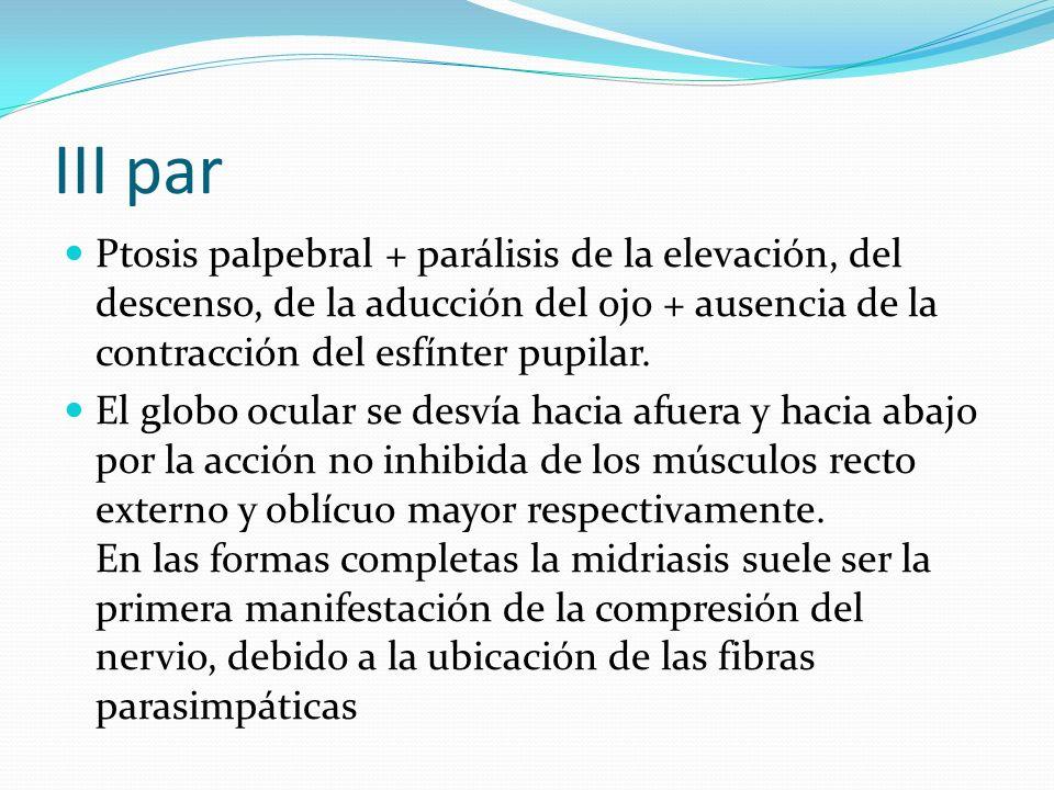 III par Ptosis palpebral + parálisis de la elevación, del descenso, de la aducción del ojo + ausencia de la contracción del esfínter pupilar. El globo