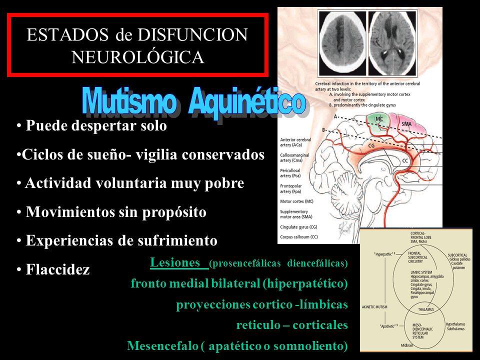 ESTADOS de DISFUNCION NEUROLÓGICA Puede despertar solo Ciclos de sueño- vigilia conservados Actividad voluntaria muy pobre Movimientos sin propósito E