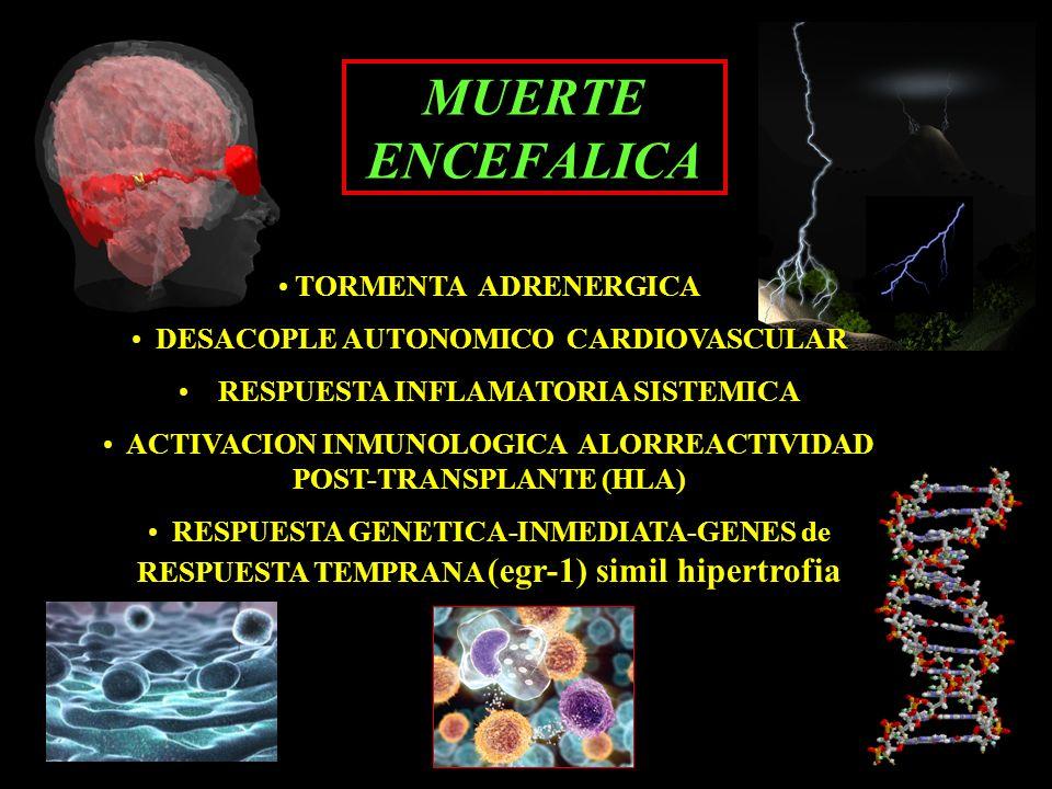 TORMENTA ADRENERGICA DESACOPLE AUTONOMICO CARDIOVASCULAR RESPUESTA INFLAMATORIA SISTEMICA ACTIVACION INMUNOLOGICA ALORREACTIVIDAD POST-TRANSPLANTE (HL