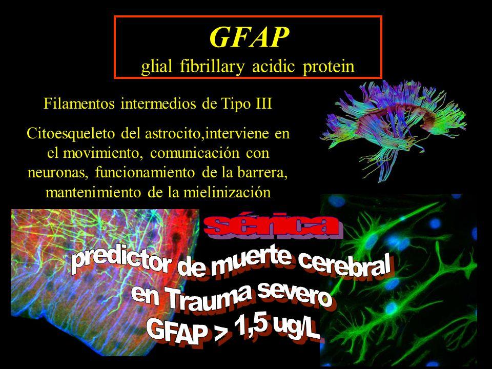 GFAP glial fibrillary acidic protein Filamentos intermedios de Tipo III Citoesqueleto del astrocito,interviene en el movimiento, comunicación con neur