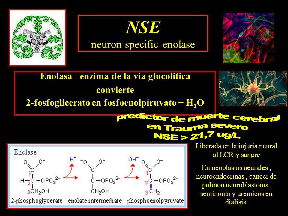 Enolasa : enzima de la via glucolitica convierte 2-fosfoglicerato en fosfoenolpiruvato + H 2 O NSE neuron specific enolase Liberada en la injuria neur