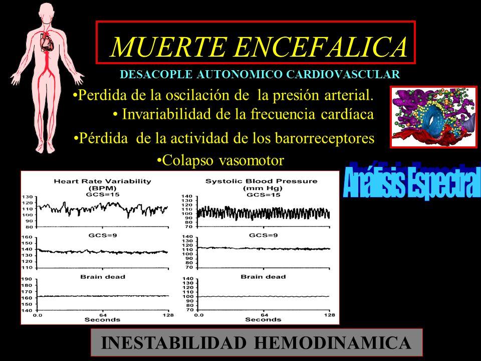 MUERTE ENCEFALICA DESACOPLE AUTONOMICO CARDIOVASCULAR Perdida de la oscilación de la presión arterial. Invariabilidad de la frecuencia cardíaca Pérdid