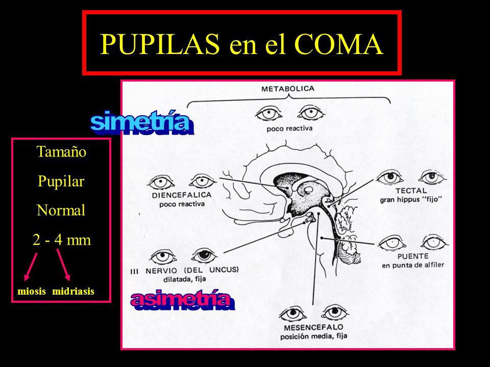 ESTADOS de DISFUNCION NEUROLÓGICA No despierta solo Ciclos de sueño- vigilia conservados Ningún tipo de actividad voluntaria Movimientos sin propósito No sufren Estado vegetativo permanente : 3 meses Estado vegetativo persistente: > 1año Lesiones (axonal es difusas) necrosis cortical hipocampo tálamo cerebelo núcleo caudado Lesiones (axonal es difusas) necrosis cortical hipocampo tálamo cerebelo núcleo caudado