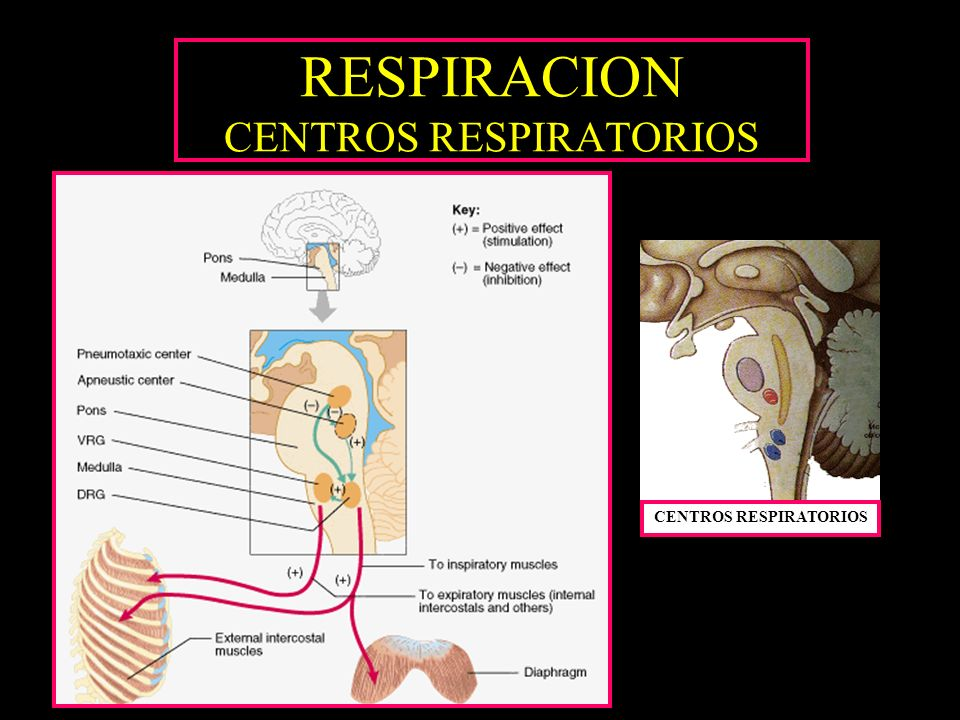 RESPIRACION CENTROS RESPIRATORIOS CENTROS RESPIRATORIOS