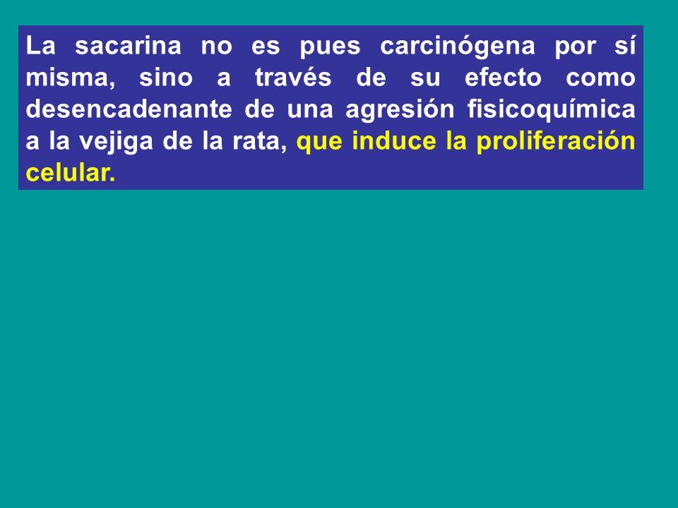 La sacarina no es pues carcinógena por sí misma, sino a través de su efecto como desencadenante de una agresión fisicoquímica a la vejiga de la rata,
