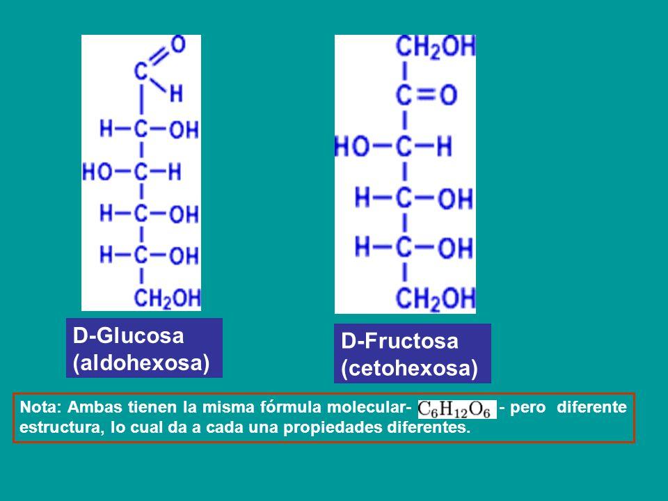 D-Glucosa (aldohexosa) D-Fructosa (cetohexosa) Nota: Ambas tienen la misma fórmula molecular- - pero diferente estructura, lo cual da a cada una propi