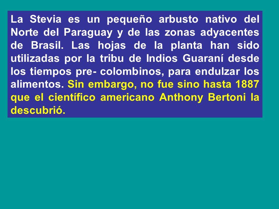 La Stevia es un pequeño arbusto nativo del Norte del Paraguay y de las zonas adyacentes de Brasil. Las hojas de la planta han sido utilizadas por la t