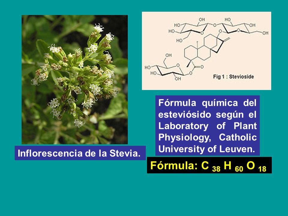 Inflorescencia de la Stevia. Fórmula química del esteviósido según el Laboratory of Plant Physiology, Catholic University of Leuven. Fórmula: C 38 H 6