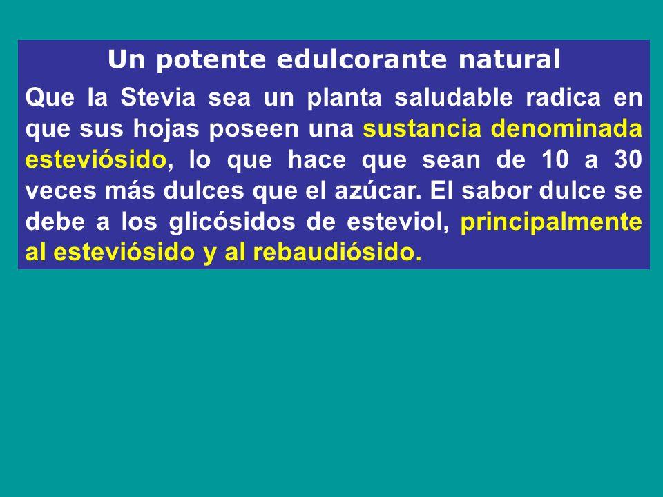 Un potente edulcorante natural Que la Stevia sea un planta saludable radica en que sus hojas poseen una sustancia denominada esteviósido, lo que hace