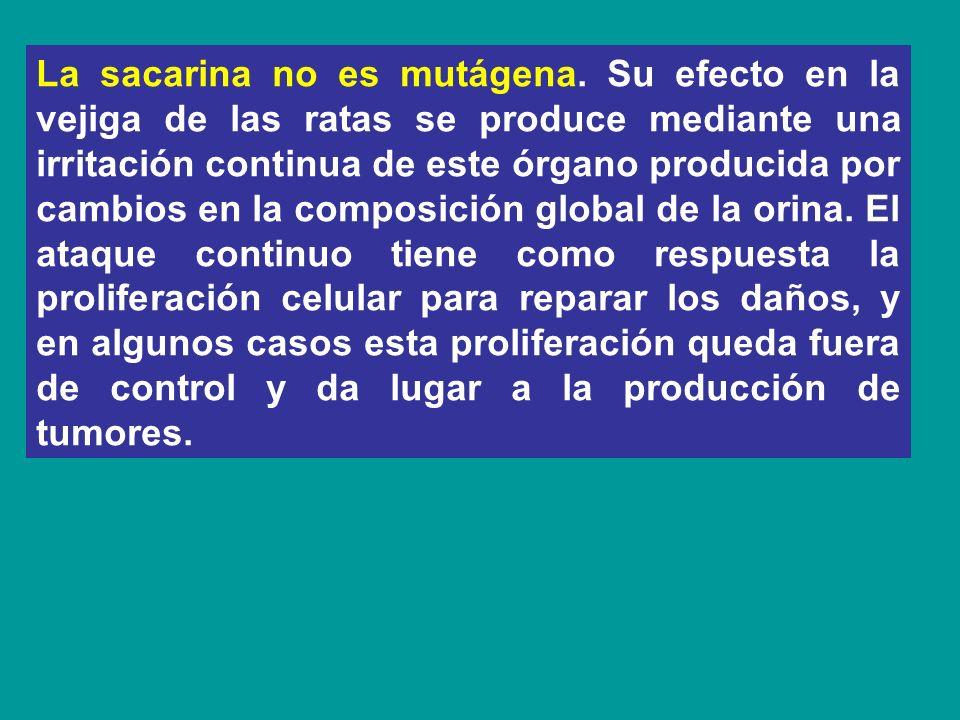 La sacarina no es mutágena. Su efecto en la vejiga de las ratas se produce mediante una irritación continua de este órgano producida por cambios en la