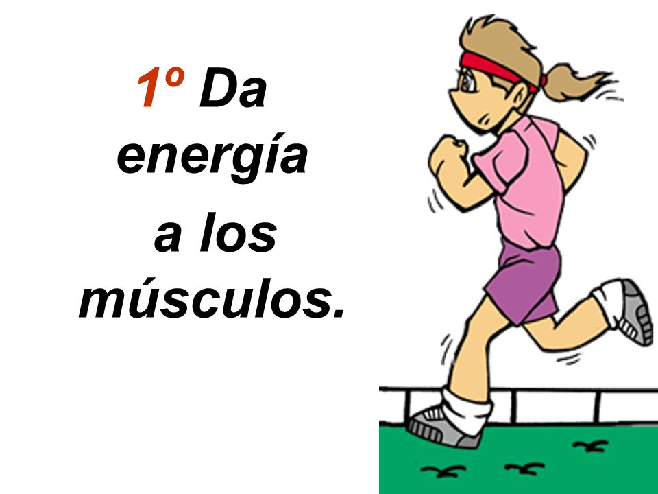 1º Da energía a los músculos.