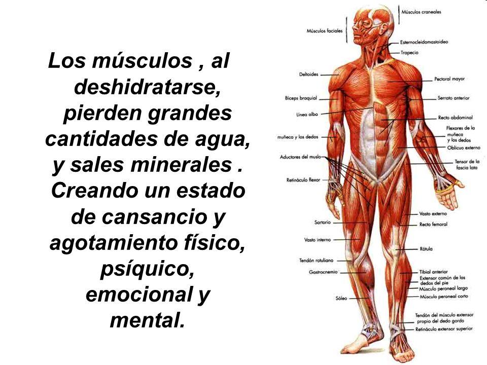 Los músculos, al deshidratarse, pierden grandes cantidades de agua, y sales minerales. Creando un estado de cansancio y agotamiento físico, psíquico,