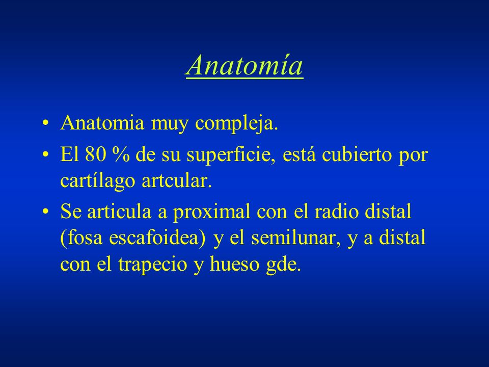 Anatomía Anatomia muy compleja. El 80 % de su superficie, está cubierto por cartílago artcular. Se articula a proximal con el radio distal (fosa escaf
