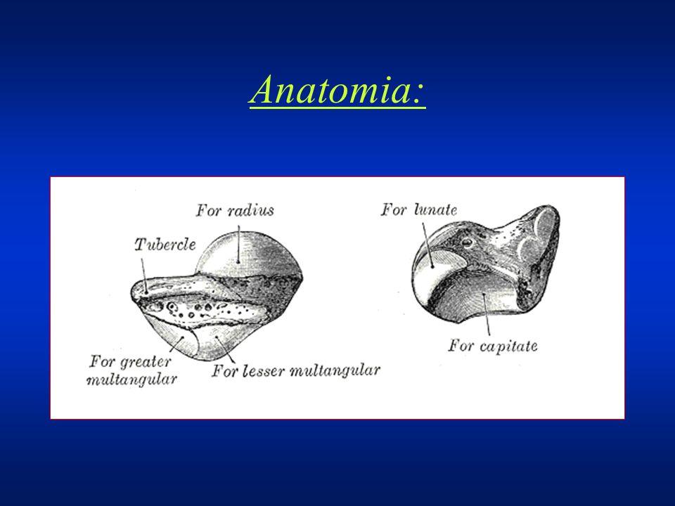 Anatomía La irrigación del escafoides ha sido bien documentada por Taleisnik y Kelly, y por Gelberman.