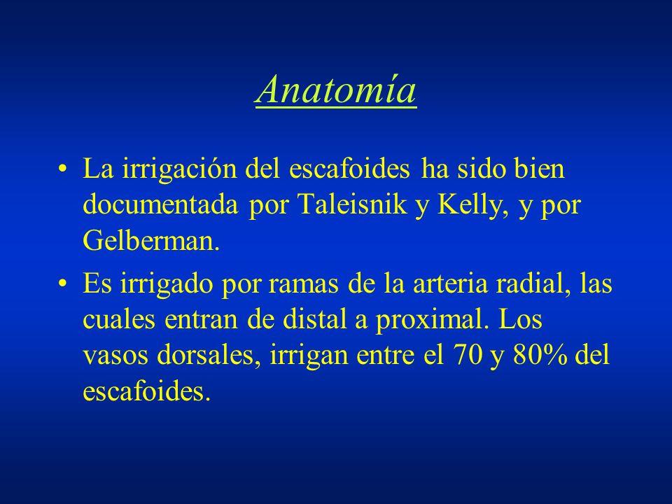 Anatomía La irrigación del escafoides ha sido bien documentada por Taleisnik y Kelly, y por Gelberman. Es irrigado por ramas de la arteria radial, las