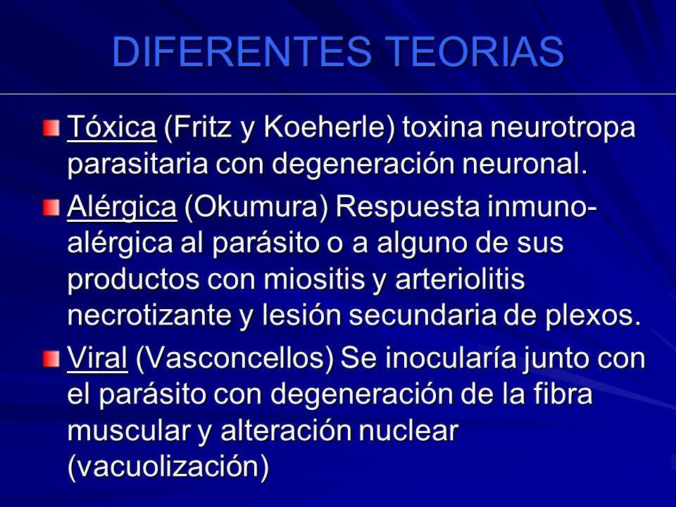 DIFERENTES TEORIAS Tóxica (Fritz y Koeherle) toxina neurotropa parasitaria con degeneración neuronal. Alérgica (Okumura) Respuesta inmuno- alérgica al
