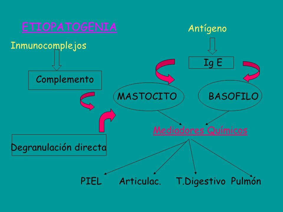 Antígeno Inmunocomplejos Ig E Complemento MASTOCITO BASOFILO Mediadores Químicos Degranulación directa PIEL Articulac. T.Digestivo Pulmón ETIOPATOGENI