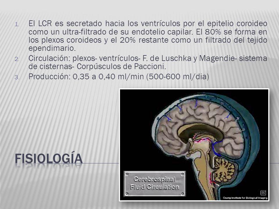 1. El LCR es secretado hacia los ventrículos por el epitelio coroideo como un ultra-filtrado de su endotelio capilar. El 80% se forma en los plexos co