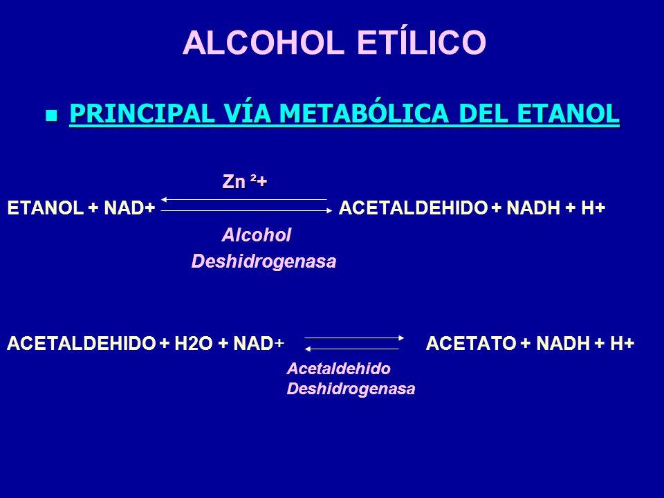ALCOHOL ETÍLICO PRINCIPAL VÍA METABÓLICA DEL ETANOL PRINCIPAL VÍA METABÓLICA DEL ETANOL Zn ²+ Zn ²+ ETANOL + NAD+ ACETALDEHIDO + NADH + H+ Alcohol Des