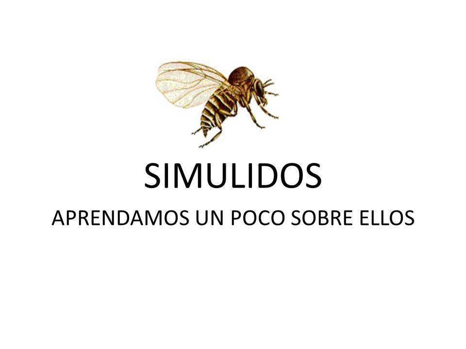 Ya están otra vez estos mosquitos Conozcamos un poco sobre ellos: Nombre Diptera: Simuliidae.
