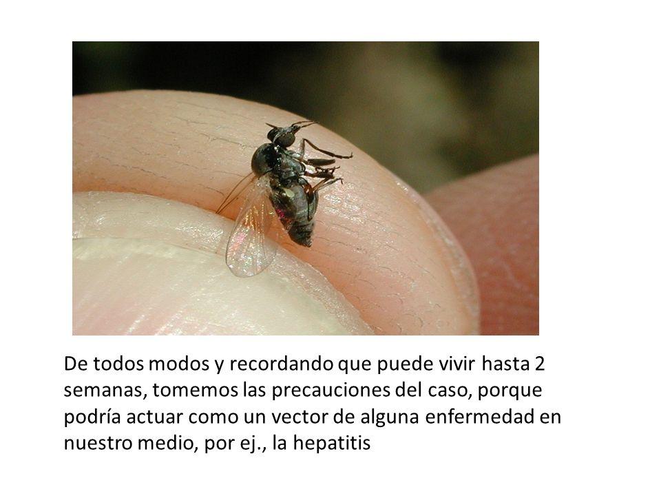 Fuentes consultadas Boletín de Malariología y Salud Ambiental.