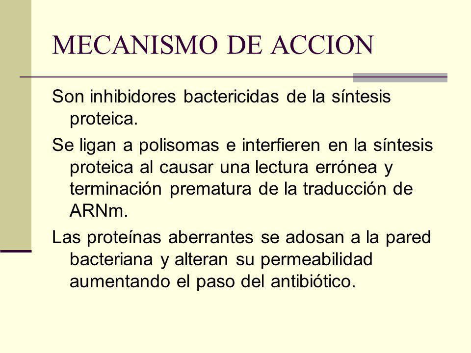 MECANISMO DE ACCION Son inhibidores bactericidas de la síntesis proteica. Se ligan a polisomas e interfieren en la síntesis proteica al causar una lec